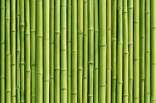 vert bambou fond de clôture