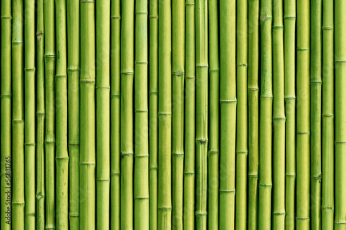 green bamboo fence background|56881765