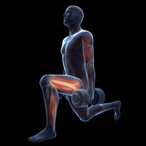 3d rendered illustration of a man doing a leg workout