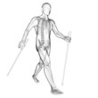 3d rendered illustration of a nordic walker