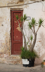 Door with Plant in Gallipoli