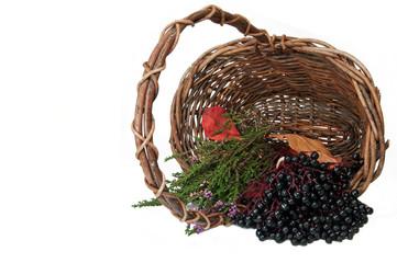 Trug with elderberry