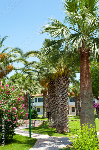 Resort hotel with a palm garden. Turkey