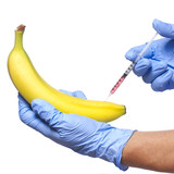 Injection into banana isolated. Genetically modified fruit
