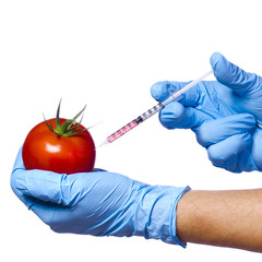 Injection into tomato isolated. Genetically modified vegetable