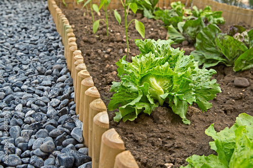 tidy vegetable garden