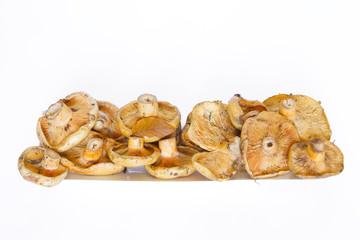 Bandeja de níscalos (lactarius deliciosus)