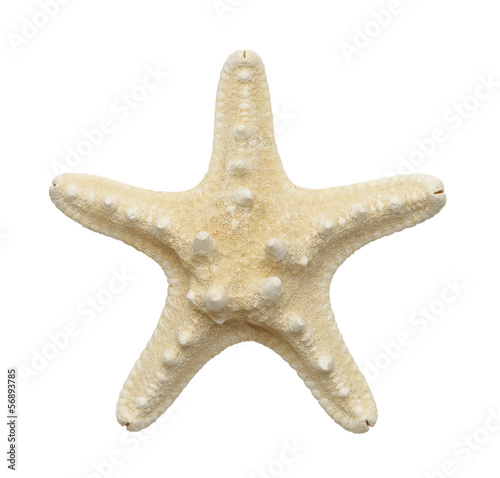 White Star Fish