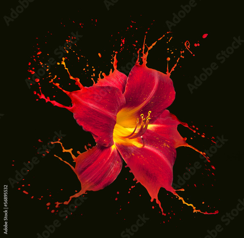 red flower splashes