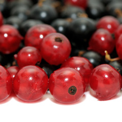 currant on white