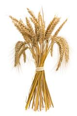 Gebündelte Roggen- und Weizenähren