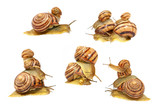 Set of snails.Isolated.