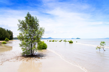 lanscape of tropical beach with mangrove tree in southern of Tha