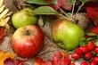 Herbstdekoration, Äpfel, Hagebutten