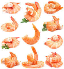 Shrimps collection