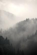 "Постер, картина, фотообои ""Foggy forest"""