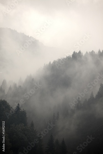Foggy forest - 56912532