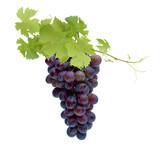 Rote Weinreben