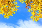 autumn leaves against blue sky