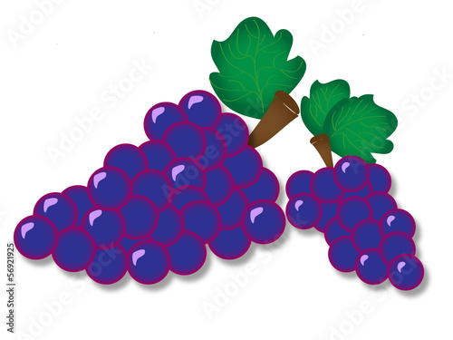 vector bunch of grapes