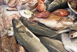 sea bass and other fresh fish