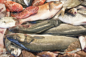 seabass and other fresh fish