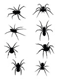 SPIDERS!!!! vector or jpeg