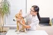 Veterinarian examines the dog's ears of breed beagle