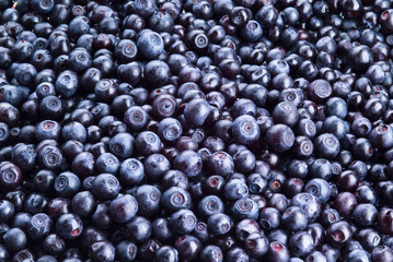 Blueberry background. Freshly picked berries