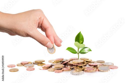 Leinwanddruck Bild finance new business - start-up - Money and plant  with hand