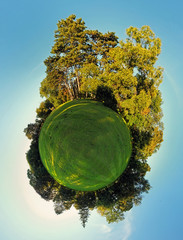 Forest Globe - Little planet
