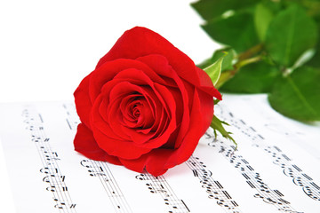 Rose and music sheets, isolated on white