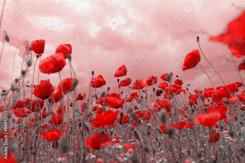 Rote Erinnerungen an Träume
