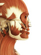 3d rendered illustration of the female head and face muscles