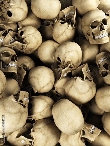 3d rendered illustration of human skulls