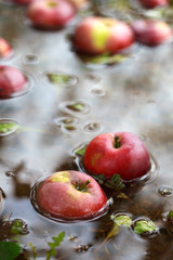 Fallen from the tree apples in the water with autumn leaves, sel