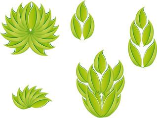 foglie bio