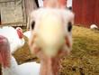 Turkey Selfie