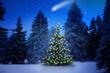 Leinwanddruck Bild - Weihnachtsbaum im Tannenwald