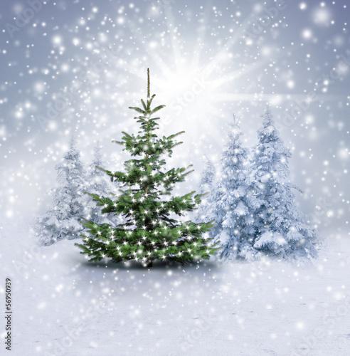 fototapete weihnachten weihnachts wald weihnachten. Black Bedroom Furniture Sets. Home Design Ideas