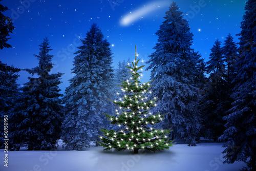 Plexiglas Bossen Weihnachtsbaum im Tannenwald