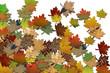 Herbstblätter blanco Hintergrund