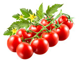Cherry tomatoes with leaves on branch isolated.