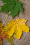 Top view of autumn colored maple leaves on top of wooden surface