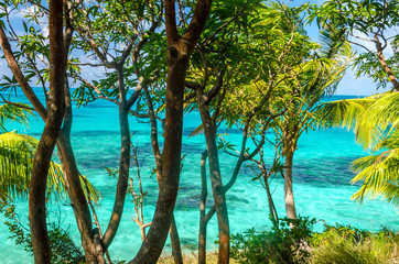 Trees and Turquoise Water