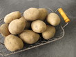 Kartoffeln vom Feld mit Erdresten im Drahtkorb