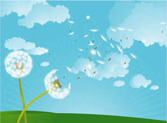Dandelion in the wind. Vector background.
