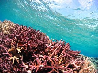 沖縄県宮古島のサンゴ礁