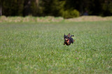 Highspeed Hund
