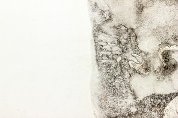 Moldy paper 2